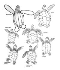TERMINOLOGY hatchlings - all bw