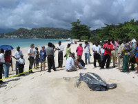 TWATCH wc.org  image - TURTLE WATCHING (Dc dawn at Grande Anse GD) - (c) C Curry MARVET (May06)
