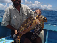 TWATCH wc.org  image - TURTLE WATCHING (Ei rescue) - (c) KIDO