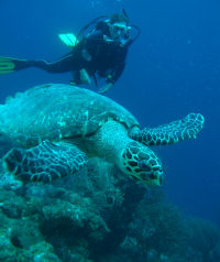 TWATCH wc.org  image - TURTLE WATCHING (Ei w diver Bonaire) - (c) Robert van Dam 2007