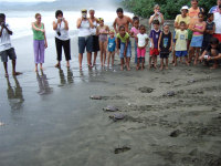 TWATCHwc.org  image - TURTLE WATCHING (Ei release at Cahuita CR) - (c) WIDECAST