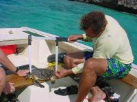 VISION Ei juv measure (boat, Bonaire) - (c) R van Dam 2002