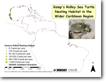 Kemp's Ridley Turtle Nesting