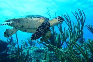 Ei w soft coral SXM - (c) Chris McCandlishlarge