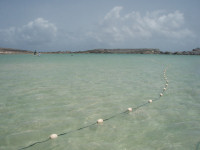 Anguilla6 - Netting Green Turtles (S Wynne)small