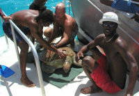 2 - Barbados - BSTP at sea census team - (c) BSTP