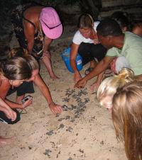 3 - Barbados - hawksbill hatchling release - (c) BSTP