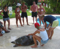 5 - Barbados - rescuing turtle from pool - (c) Barry Krueger