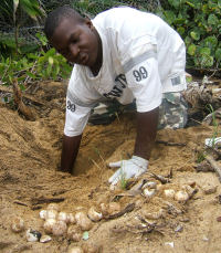 7 - Belize - Nest excavation - (c) Gales Pt Wildlife Trust