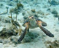 BIOEI Ei hovering near seabed - (c) Caroline Rogers