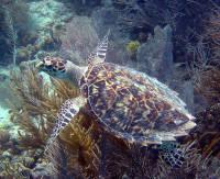 BIOEI Ei reef StJ3 - (c) Caroline S Rogers