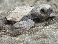 BIOLO Lo hatchling (close) - (c) ANAI