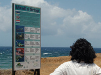Curacao2 - sea turtle foraging lookout