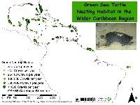WCR_Green_Nesting_24Sept2008_jpg_3_300×2_550_pixels
