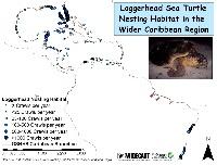 WCR_Loggerhead_Nesting_24Sept2008_jpg_3_300×2_550_pixels