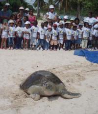 Guadeloupe4- Release Sea Turtle - (c) L
