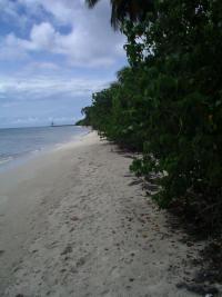 Guadeloupe5- Nesting Beach Trois-Ilet (Kap'Natirel)