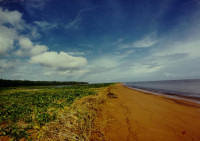 Guyana1 - Shell Beach (GMTCS)