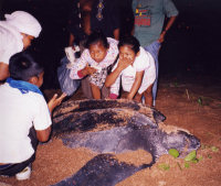 Guyana7 - Education Camps children seeing a Leatherback for the first time (GMTCS)