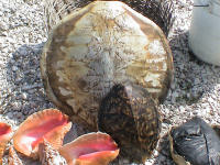Haiti1 - shells for Sale (J Weiner)