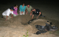 est-turtle-watching-ocean-spirits-c