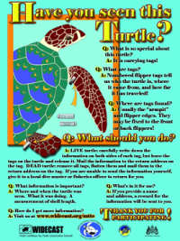 Marine Turtle Tagging Poster