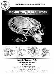 The Anatomy of Sea Turtles